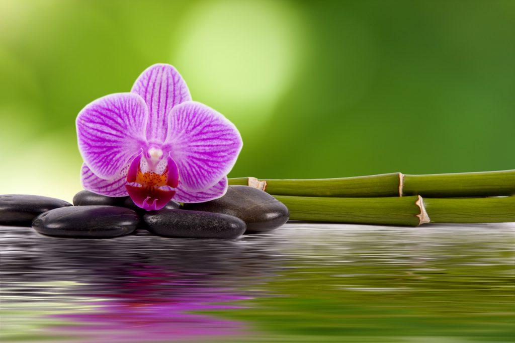 orquidea, piedras, bambú y agua